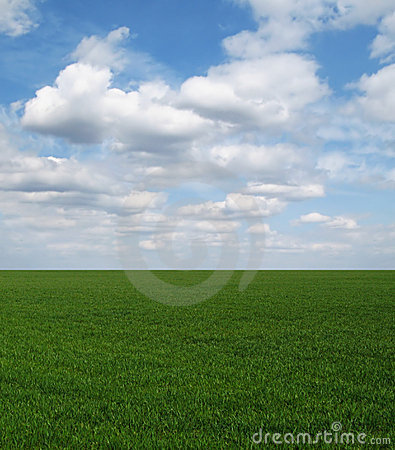 Straight green field under blue sky