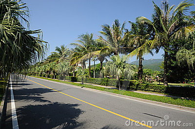 Straight road with palm trees