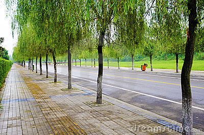 Straight road with trees