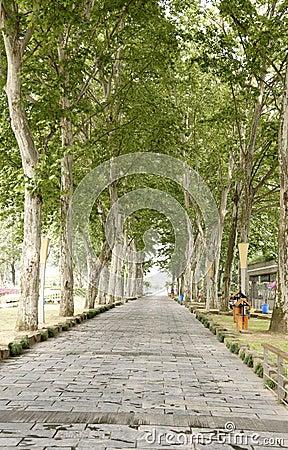 Straight road under trees