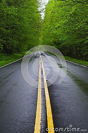 Straight wet road