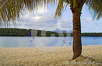 Strand met palm en verre windsurfer
