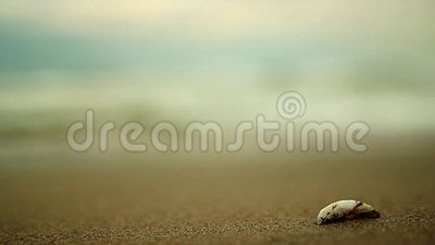 Strand och skal stock video