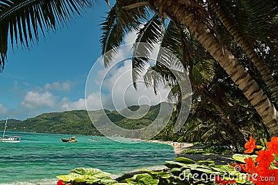Strandblommalagunen gömma i handflatan paradistrees