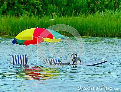 Stranded dog at high tide