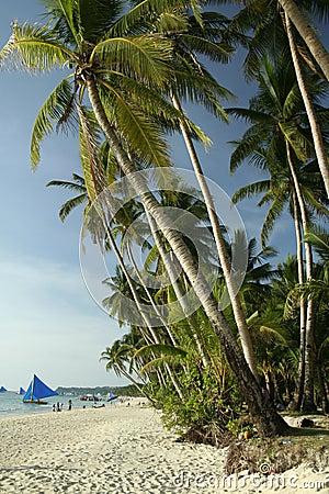 Stranden boracay gömma i handflatan philippines trees