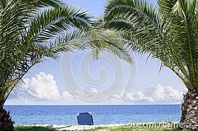 Stranden gömma i handflatan paradistrees