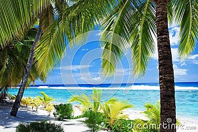 Strandlagun som förbiser palmträd
