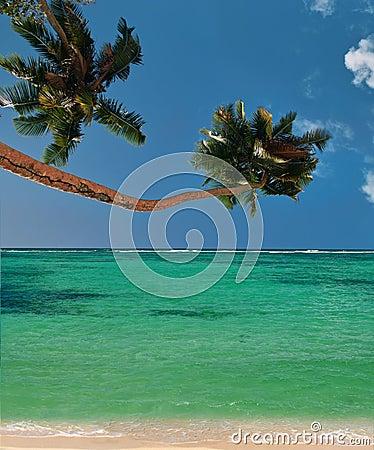 Strandlagunen gömma i handflatan paradistrees