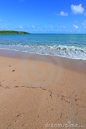 StrandPuerto Rico hav sju