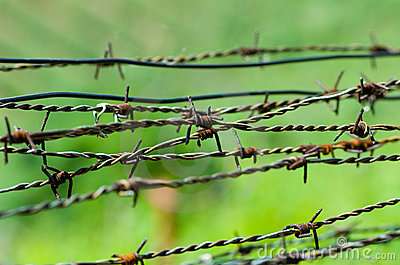 Strands of barbed wire