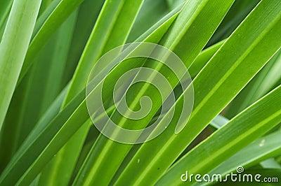 Strands of Green