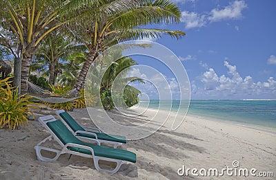 Strandstolar varar slö tropiska palmträd