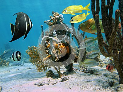 Strange forms of sea life in a coral reef