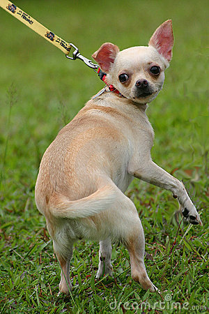 Stranggled dog