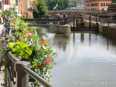 Strasbourg flowers