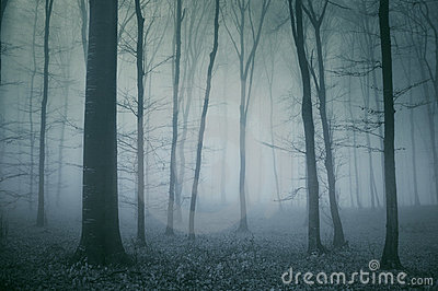 Straszna ciemna lasowa scena