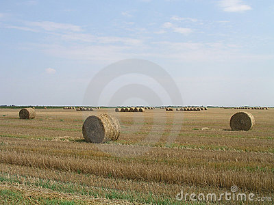 Straw bales in countryside