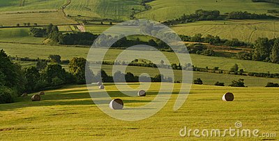 Straw bales in landscape