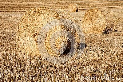 Straw crop