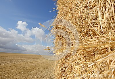 Straw Haystack in Harvested Field