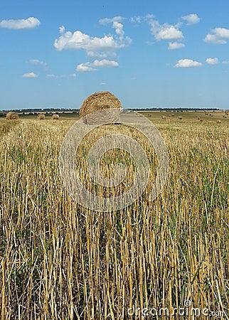 Straw Haystacks on the field