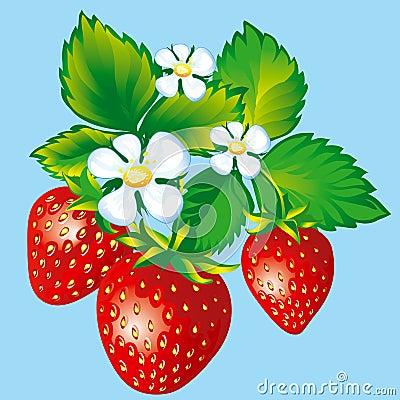 Free Strawberries Royalty Free Stock Photos - 2636638