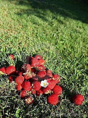 Strawberries on grass