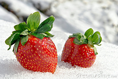 Strawberries on Ice in Cold White Winter