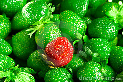 Strawberries mutant