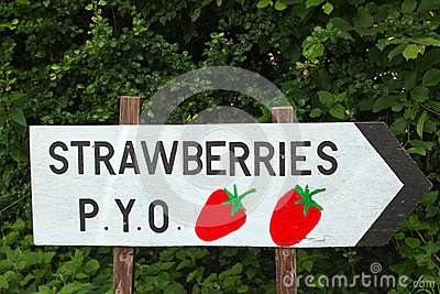 Strawberries pick your own wooden sign