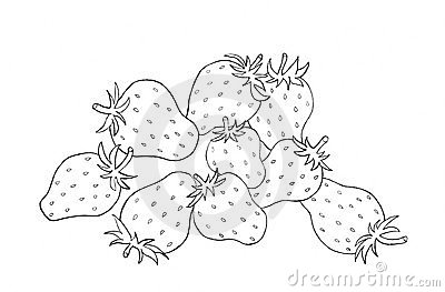Strawberries sketch