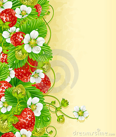 Strawberry frame 2. Red berry and white flower