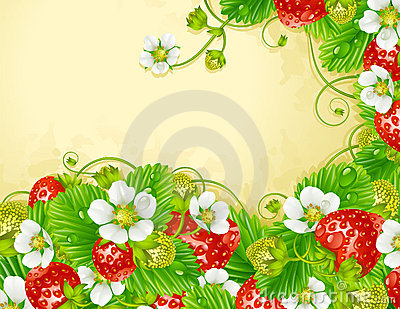 Strawberry frame. Red berry and white flowe