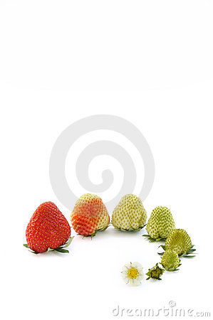 Free Strawberry Growth Isolated On White Stock Images - 12847194