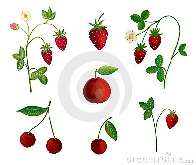 Strawberry plants and fruits