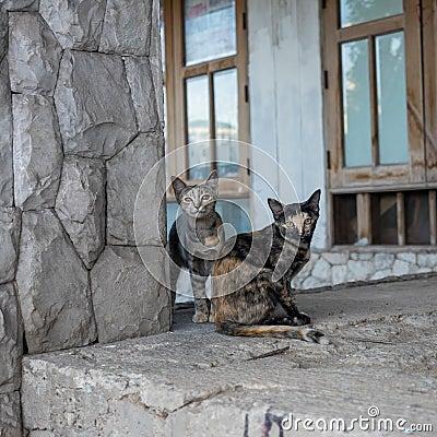 Stray Cat In Abandon House Stock Photo Image 57959403
