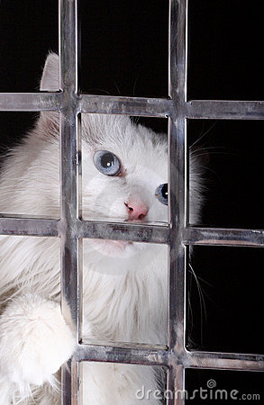 Stray cat in cages.