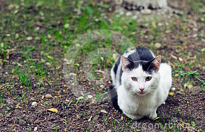 Stray cat in a garden