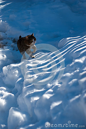 Stray cat in the snow