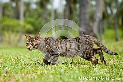 Stray Cat Walking in Long Grass