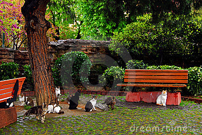 Stray cats in Istanbul Park