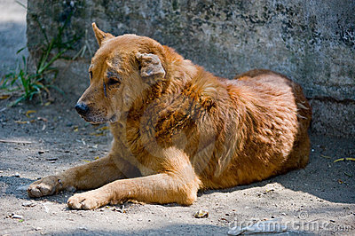 Stray dog in Guatemala