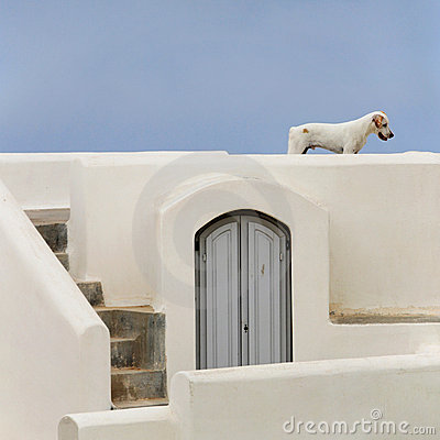 Stray dog in Santorini