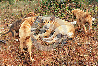 Stray mother dog and pups