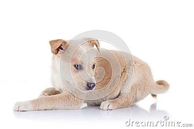 Stray puppy sitting
