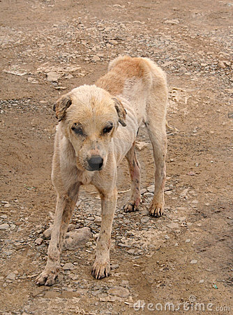 Sad Stray Animals | www.pixshark.com - Images Galleries ...