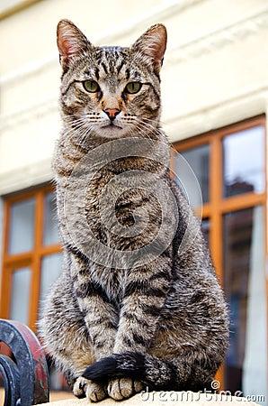 Free Stray Tabby Cat Royalty Free Stock Photos - 19133898