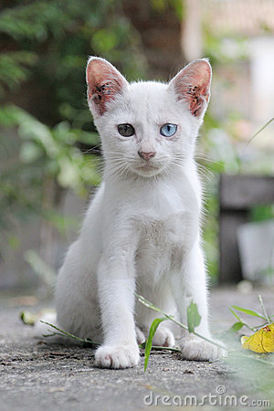 Stray White Kitten