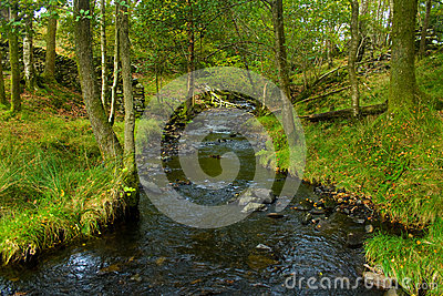 Stream Stock Photo - Image: 25246730